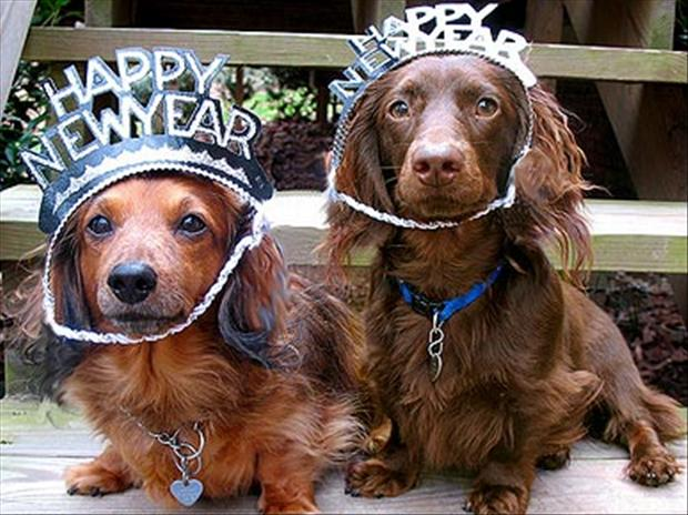 Funny-new-years-resolutions-funny-dogs.jpg