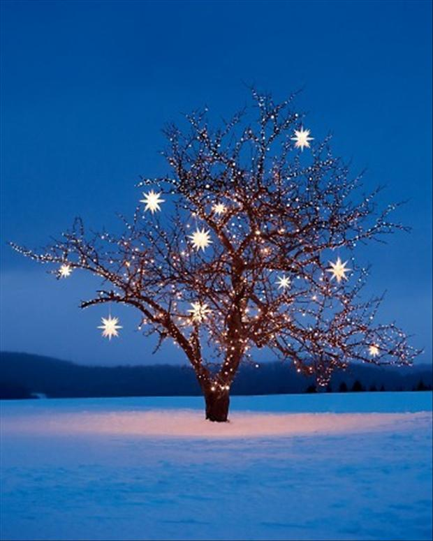 Holiday Light Tour: Submit Your Favorites! blog image 4