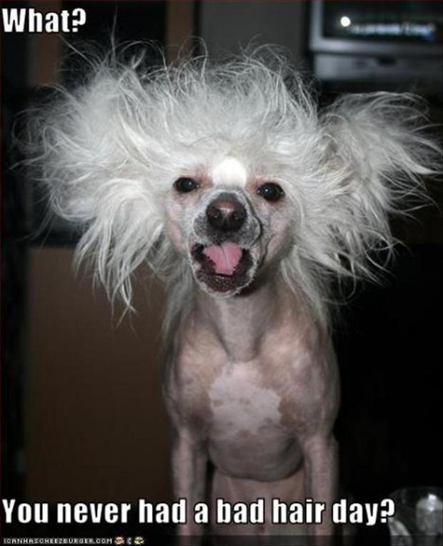 Funny Bad Hair Day Quotes Pictures