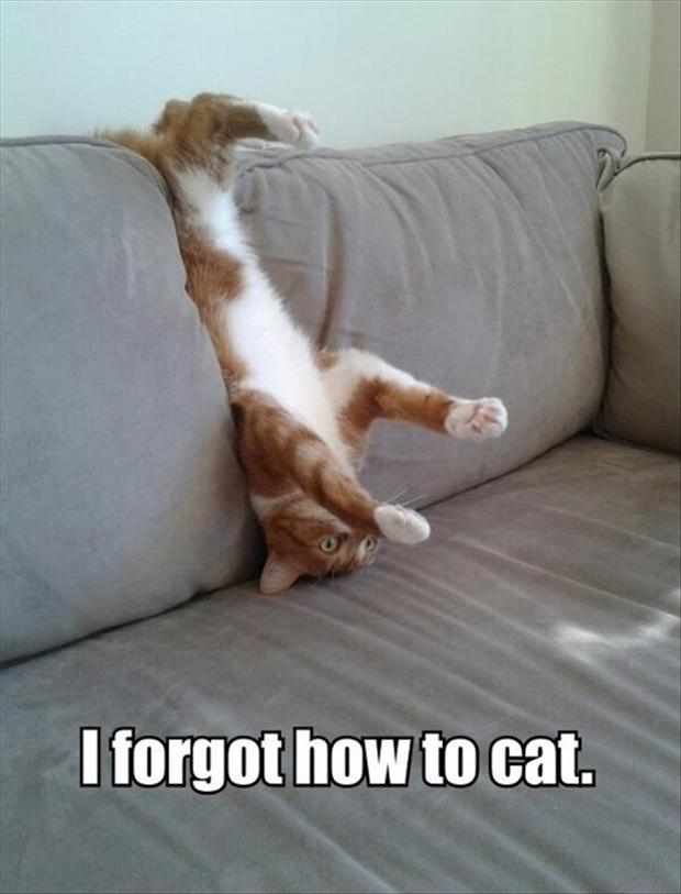 Cat On Couch, Funny Pictures