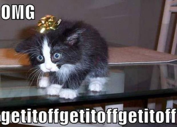 christmas ribbon, funny cats - Dump A Day
