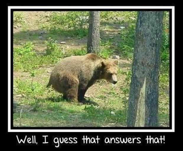 Image result for does a bear shit in the woods