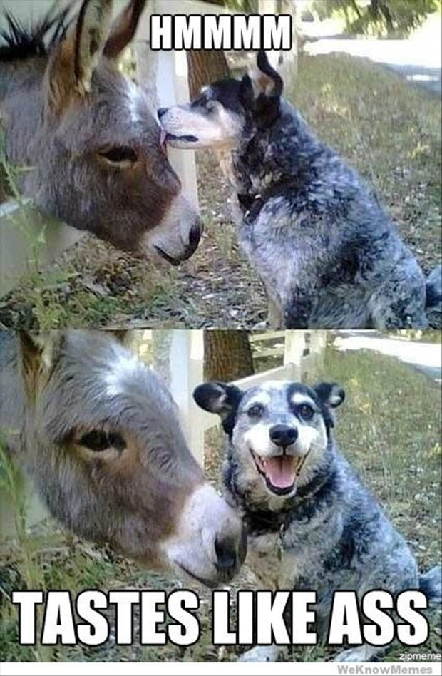 dog-and-donkey-funny-pictures.jpg