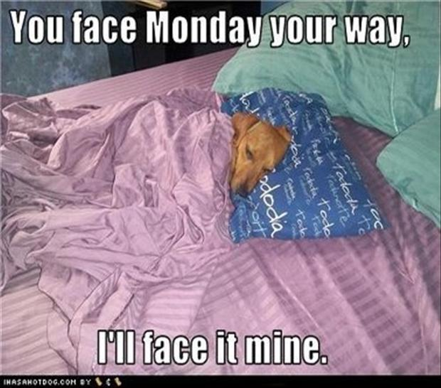 dog in bed on monday morning funny pictures   dump a day