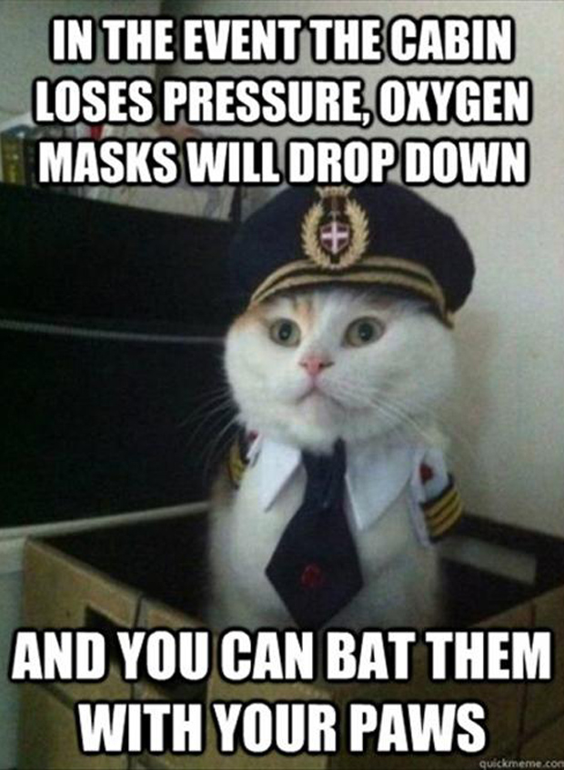 funny cats, airline pilot, meme  Dump A Day