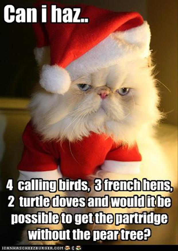 Funny Christmas Cat Quotes Lolrofl Com Cute Funny Cat Wallpaper