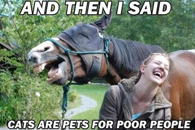 funny horses, cats are pets for poor people
