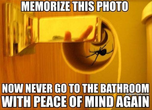 Funny spider pictures with quotes quotesgram for Phobia of going to the bathroom