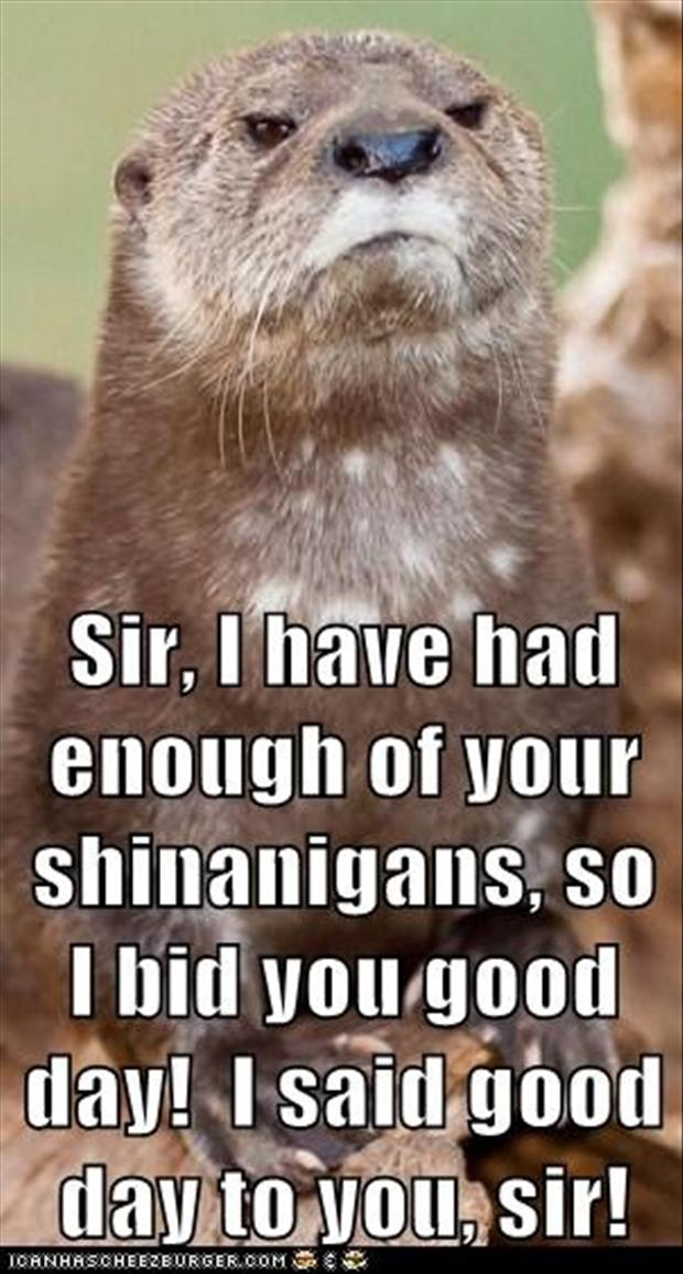 Good Morning Otter Meme : Funny have a good day pictures imgkid the
