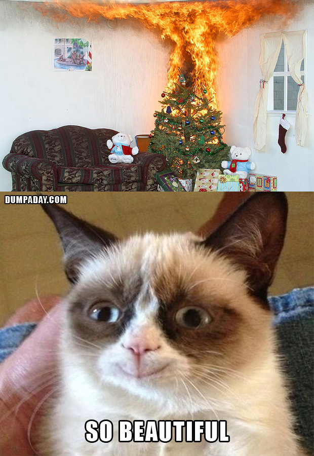 the opposite of grumpy cat : aww