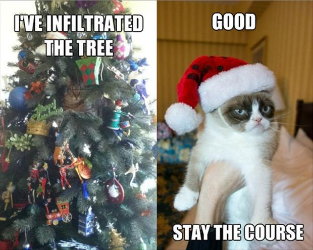grumpy cat, funny christmas pictures - Dump A Day