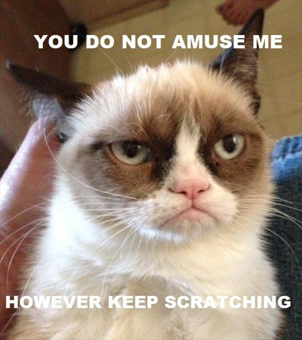 grumpy cat does not - photo #8