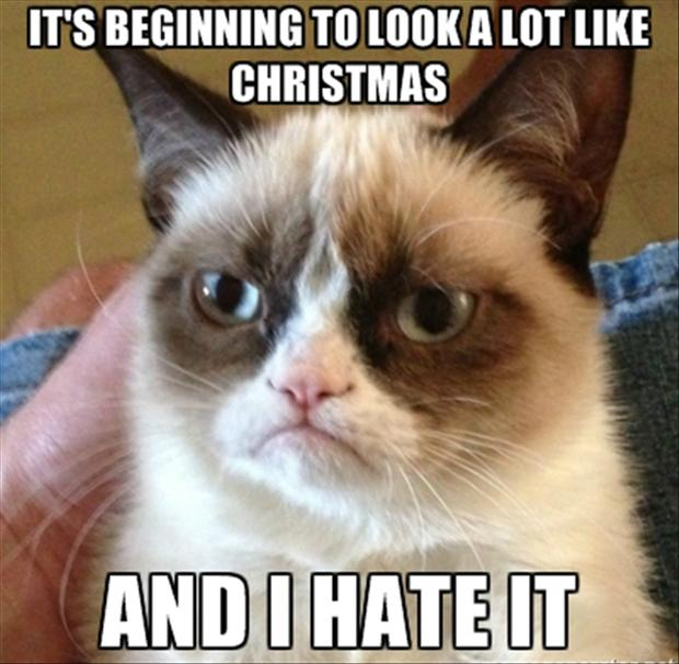 http://www.dumpaday.com/wp-content/uploads/2012/12/grumpy-cat-its-beginning-to-look-a-lot-like-christmas.jpg