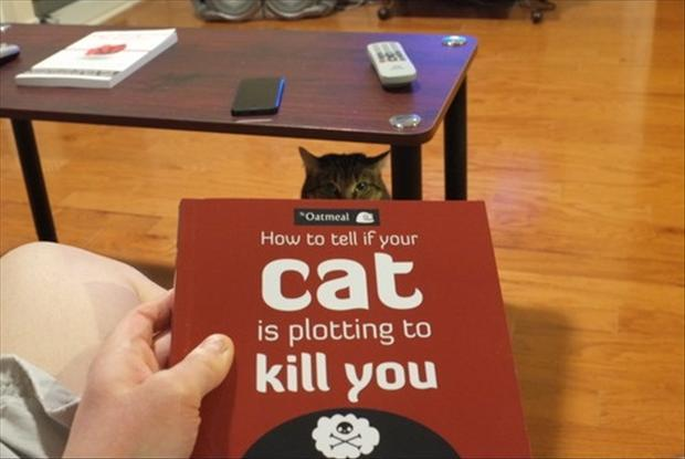 how to kill a cat Cats can be your best friend, and they can own that title that dogs have held for  so long but if you want them to remain your best friend and live a.