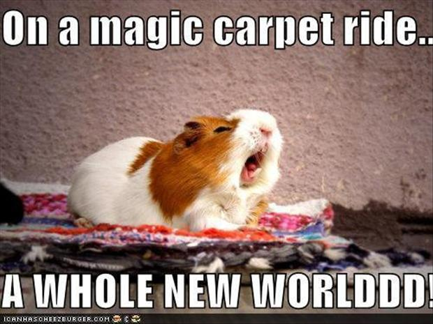 magic carpet ride, funny pictures