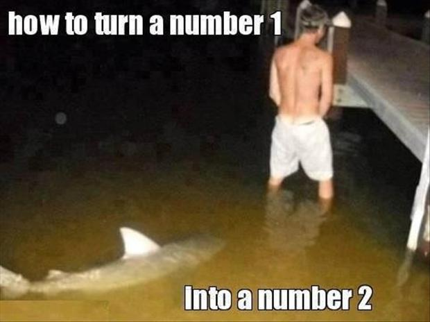 man peeing in water, shark swimming, funny captions