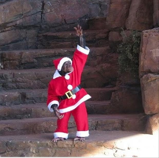 santa monkey, funny christmas pictures - Dump A Day