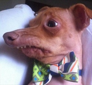 ugly dog, funny pictures