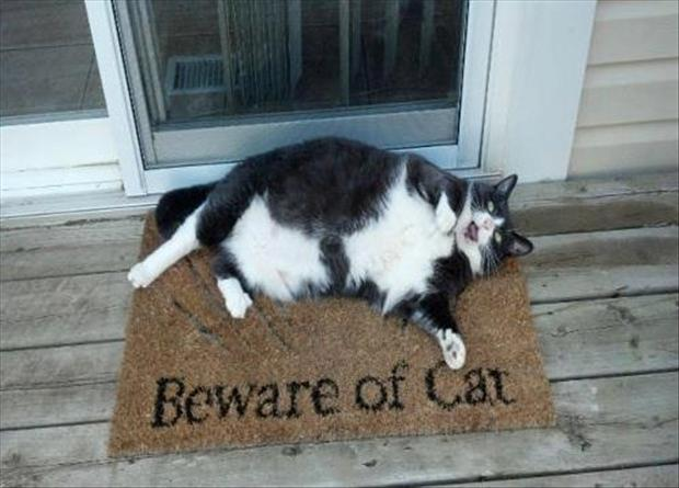 1 beware of cat