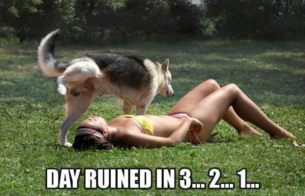 1 dog pees on woman tanning in a bikini, having a bad day