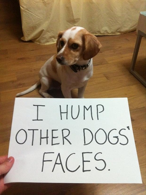 1 dog shaming, funny pictures (3)