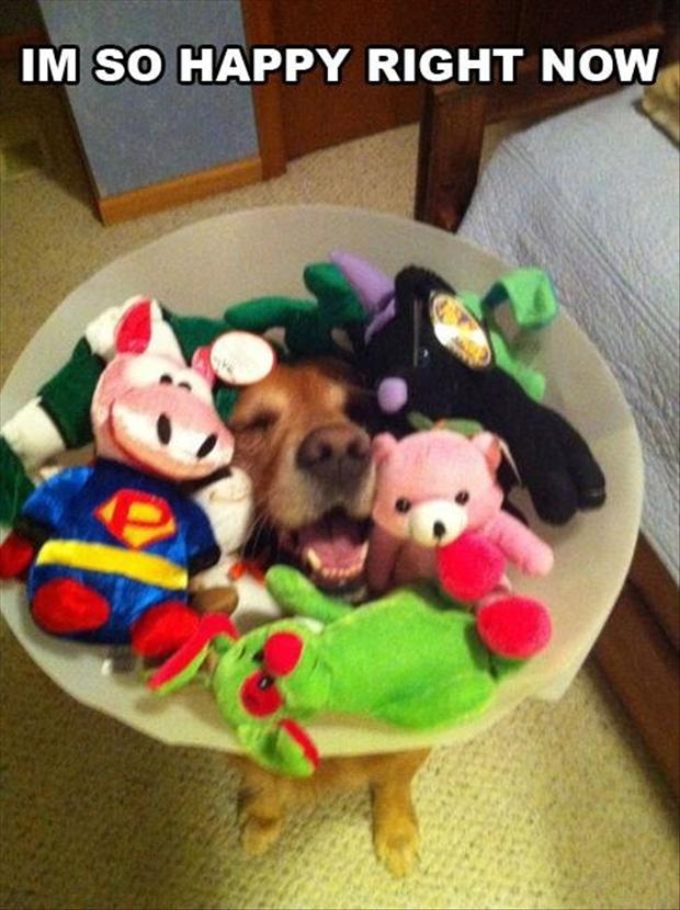 1 funny dog with cone on his head