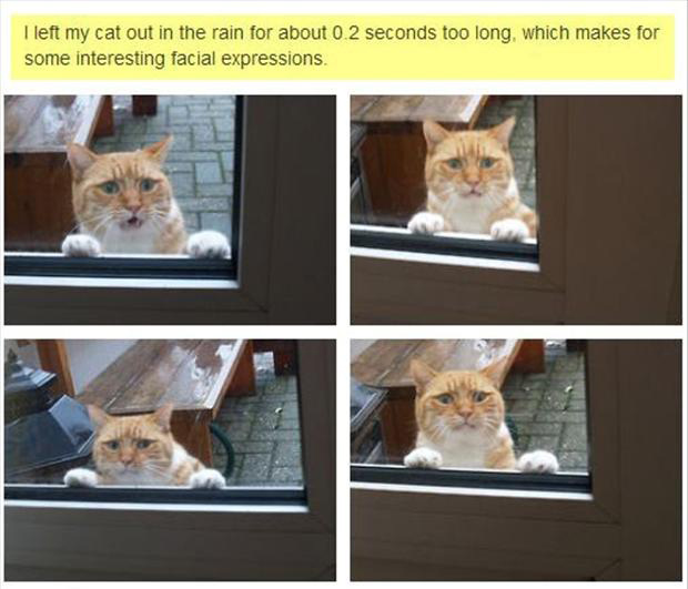 1 funny outside cat, faces