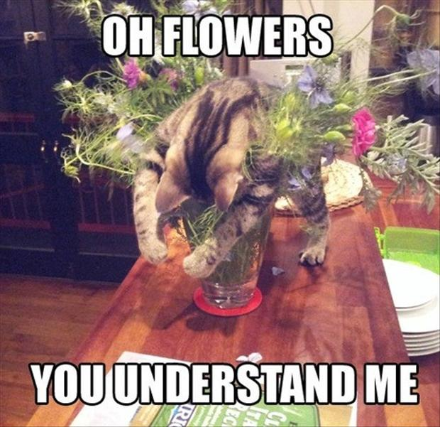 1 funny pictures, cat loves flowers