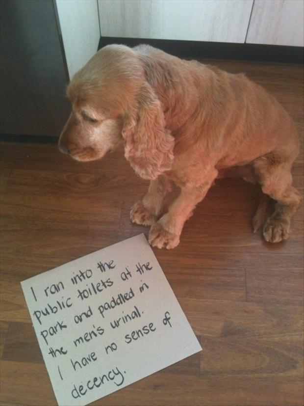 2 dog shaming, funny pictures
