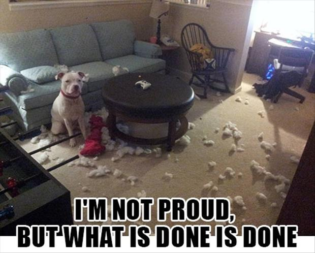 2 funny dog chewed up pillows