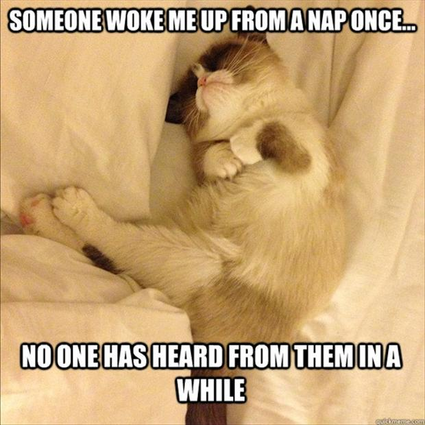 Funny Sleepy Meme : Grumpy cat taking a nap funny pictures dump day