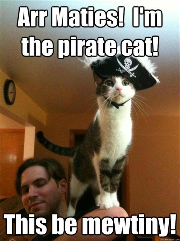 2 pirate cat, funny pictures