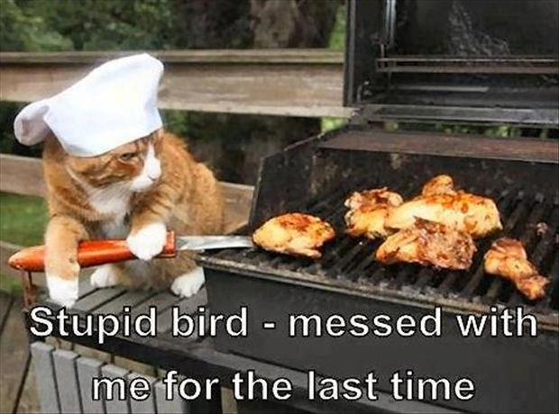 3 cat cooks bird on bbq, funny pictures
