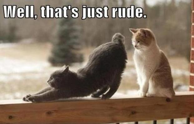 3 cat shows other cat his butt, funny pictures