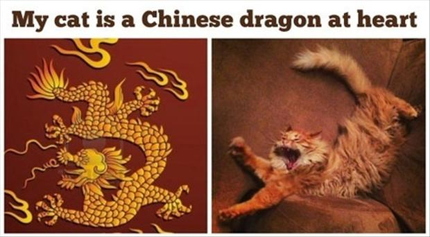 3 funny cat is a dragon