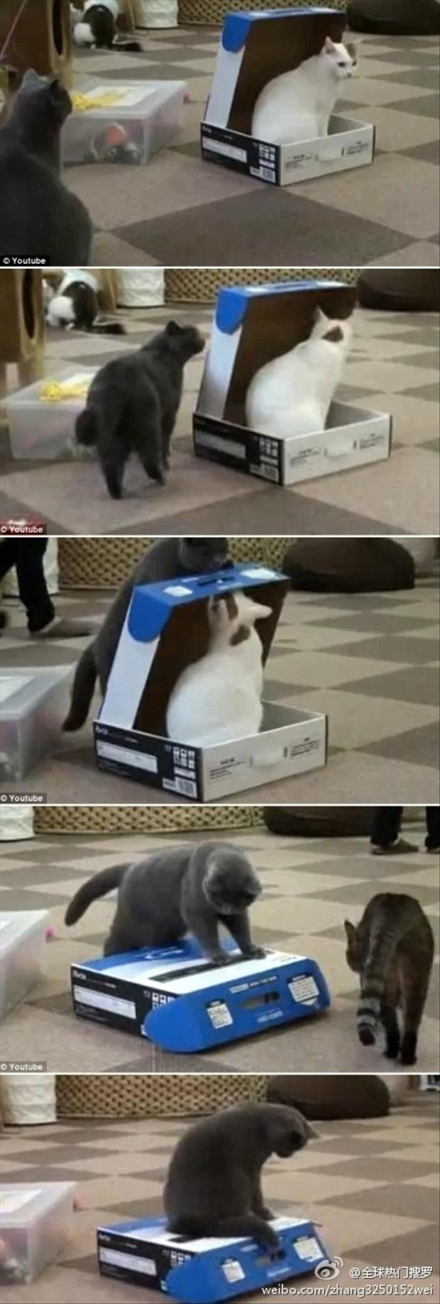 3 funny cats in the box,