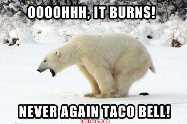 3 funny taco bell, polar bear taking a dump
