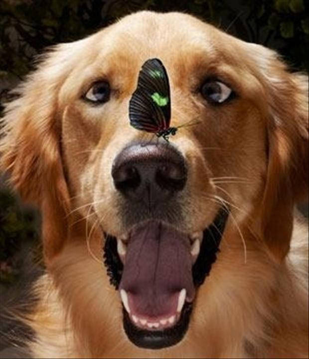 4 happy dog has butterfly on his face