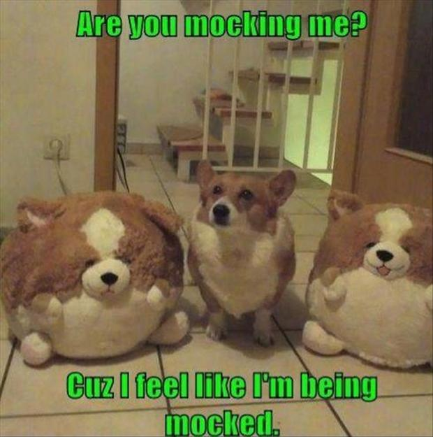 5 funny fat dog, are you mocking me