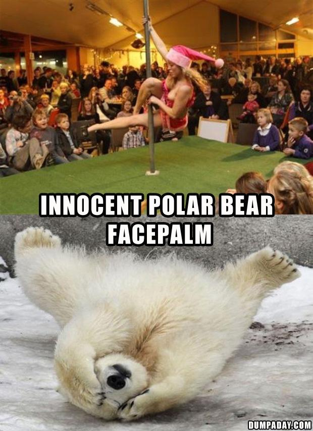 6 polar bear facepalm