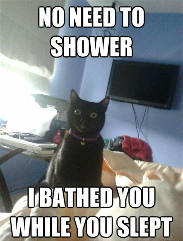 9 funny cat, bathed you while you slept