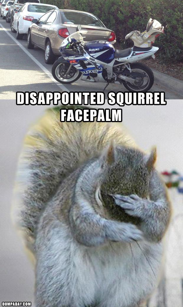 DISAPPOINTED SQUIRREL FACEPALM