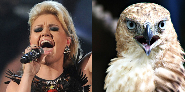 Kelly Clarkson A Super-Chill Hawk