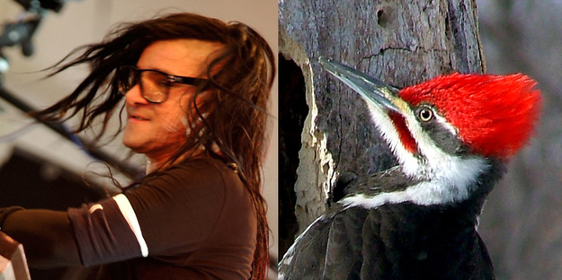 Skrillex A Woodpecker
