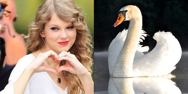 Taylor Swift An Earnest Swan