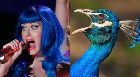 If Pop Stars Were Birds – 22 Pics