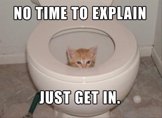 a cat in the toilet, no time to explain, just get in