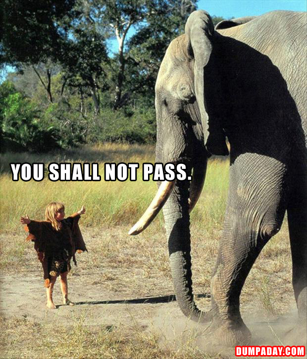 a elephant, you shall not pass