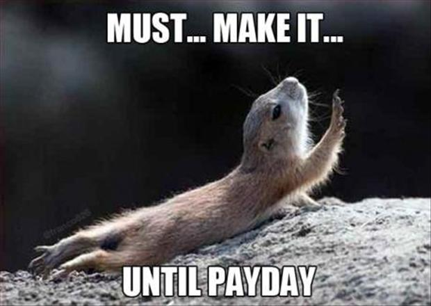 a funny animal pictures, payday