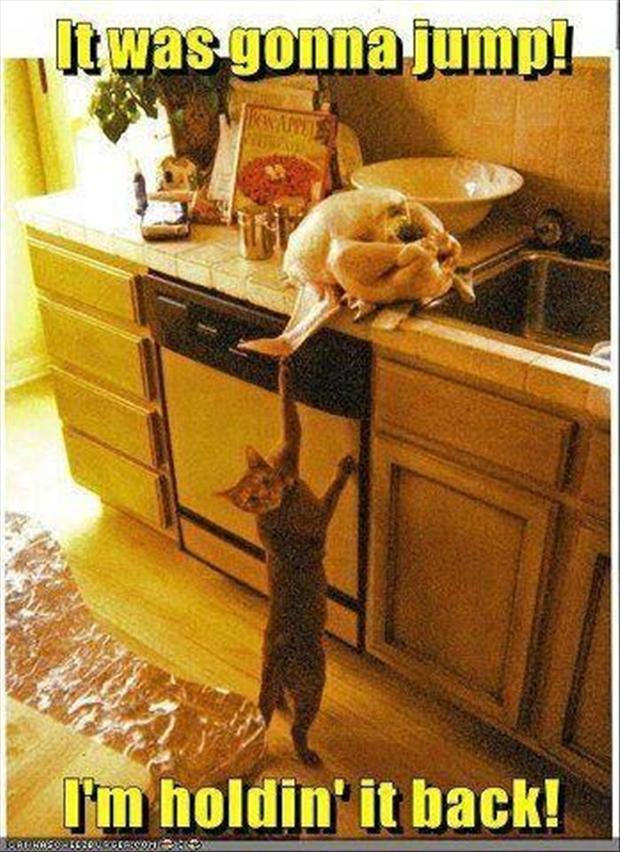 a funny cat pictures